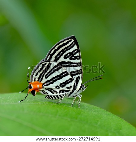 Butterfly , Thailand - stock photo