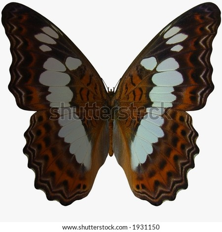 Butterfly-White Admiral - stock photo