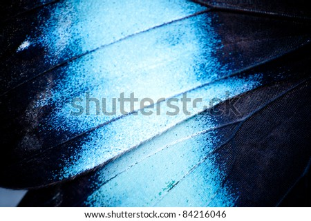 Butterfly Wing - stock photo