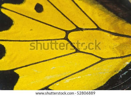 butterfly wing detail texture background - stock photo