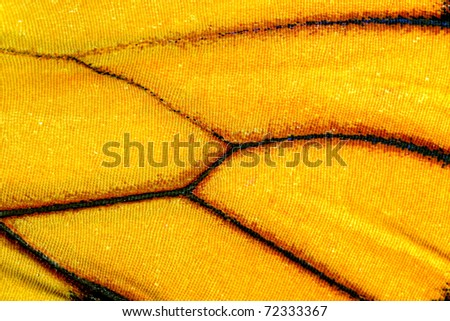 Butterfly wing, Monarch, Milkweed, Wanderer, Danaus plexippus - stock photo