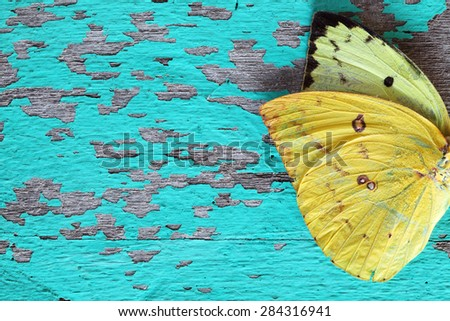 butterfly wing on grunge colorful wooden panel - stock photo