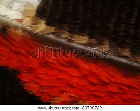Butterfly wing scales - stock photo