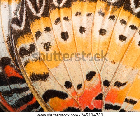 Butterfly wing texture, close up of detail of butterfly wing for background - stock photo