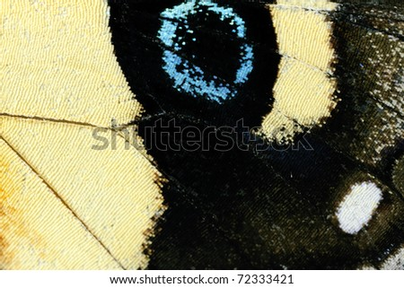 Butterfly wing, Yellow Admiral, Vanessa itea - stock photo