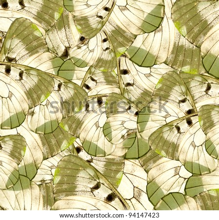 Butterfly wings background - stock photo
