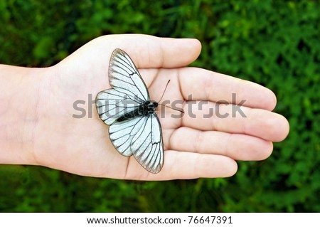 Butterfly with black stripes on white wings on the hand of the child against the background of green grass - stock photo