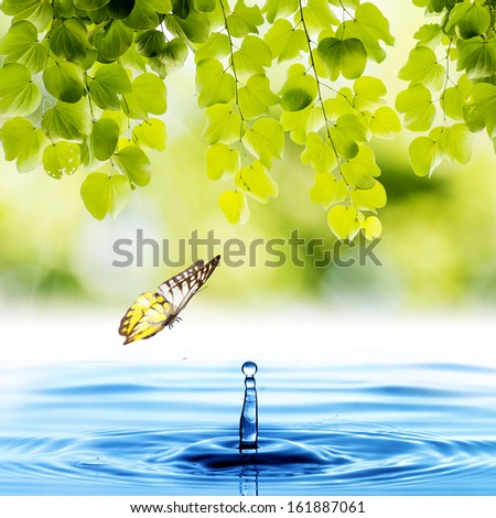 Butterfly with green leaf and water drop - stock photo