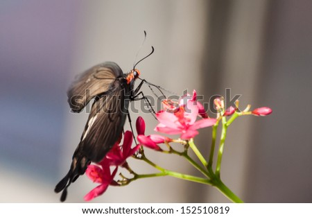 Butterfly with red flowers - stock photo