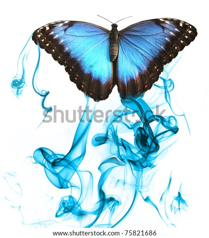 Butterfly with smoke, isolated on white background - stock photo