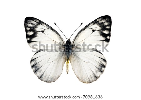 Butterfly, Yellow Spotted Jezebel, Delias nysa, male, wingspan 47mm - stock photo