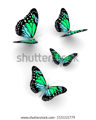 Butterflys isolated on white. 3d illustration. - stock photo