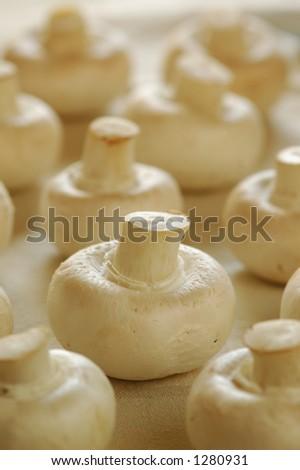 Button Mushrooms. Close-up. - stock photo