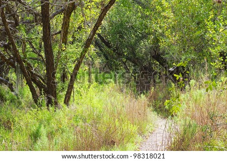 Buttonwood (Conocarpus erectus) forest with hiking trail in the Florida Everglades National Park. - stock photo