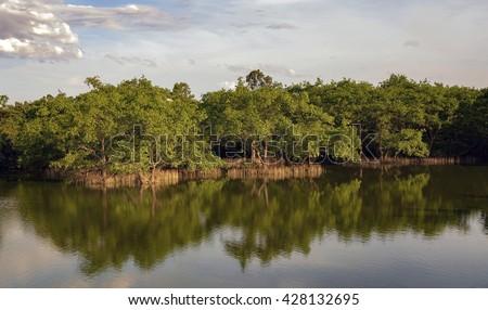 CA MAU, VIET NAM, April 10, 2016 Mangrove forests, seas Ca Mau, Vietnam