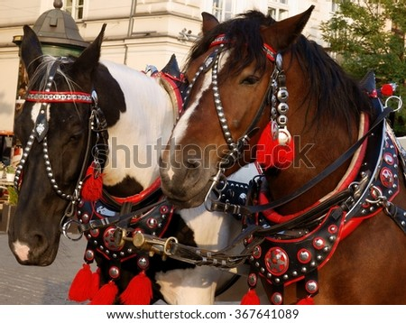 cab-horse in ornamental clothing