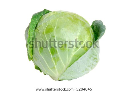 Cabbage green on white background