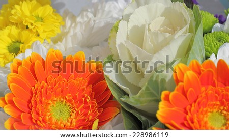 cabbage rose amongst flowers - stock photo