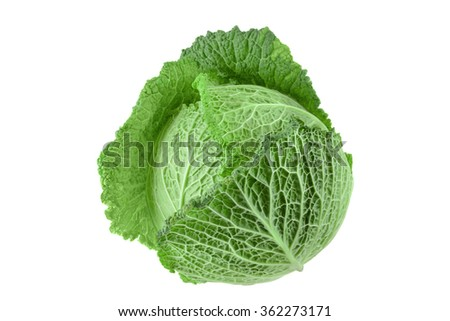 Cabbage vegetable isolated on white background - stock photo