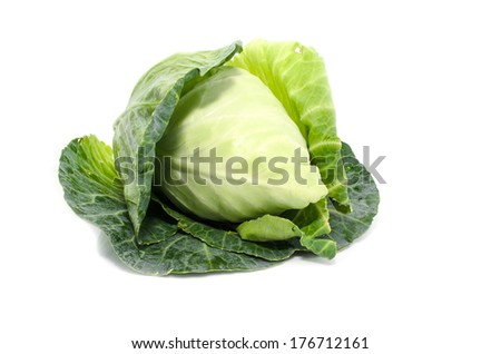 cabbage with green large leaves grows isolate on white background