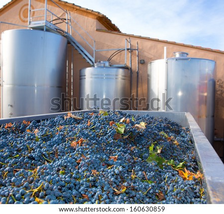cabernet sauvignon winemaking with grapes and Fermentation stainless steel tanks vessels - stock photo