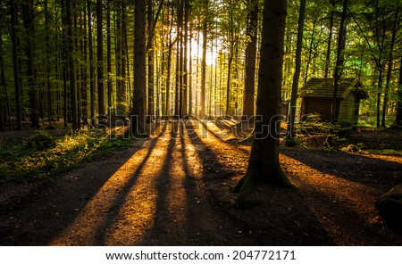 Cabin in the woods - sunset in the forest - stock photo