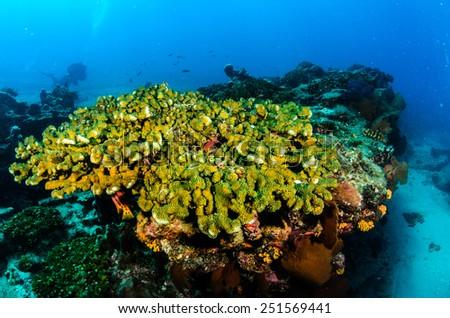 Cabo pulmo coral reef, sea of cortez, mexico  - stock photo