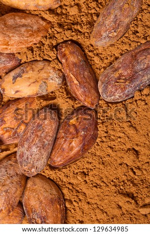 cacao beans and cacao powder - stock photo