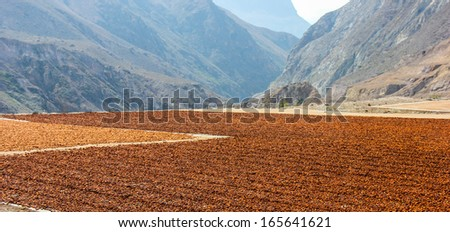 cacao beans drying by the roadside, Andes, Ecuador - stock photo