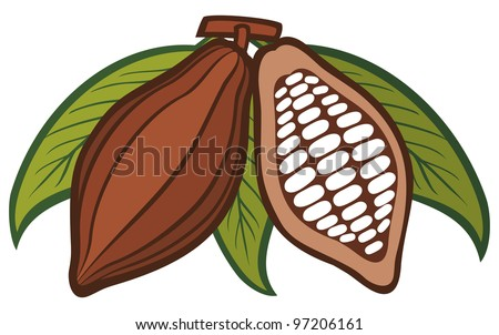 Cacao - cocoa beans - stock photo