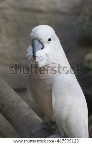 cacatua parrot on its perch