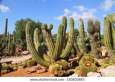 Cacti at Bontanicactus,Ses Selines, Mallorca, Spain - stock photo