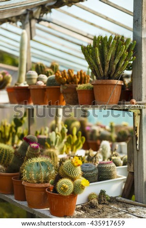 cacti bloom in the greenhouse image with selective focus - stock photo