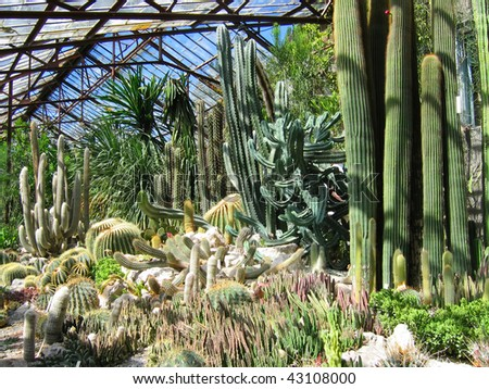 Cacti of various forms - stock photo