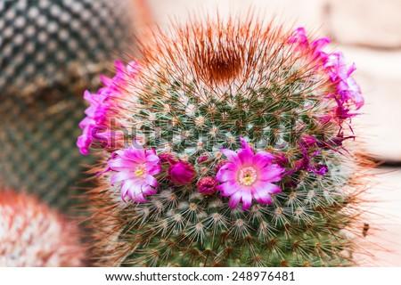 Cactus - stock photo