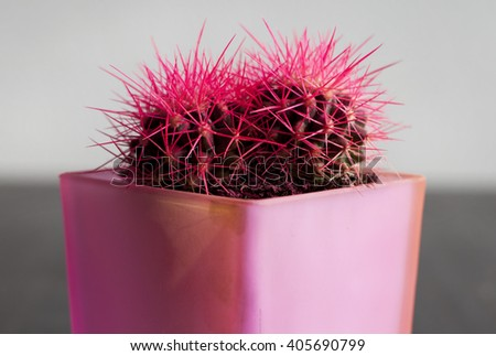 cactus. - stock photo