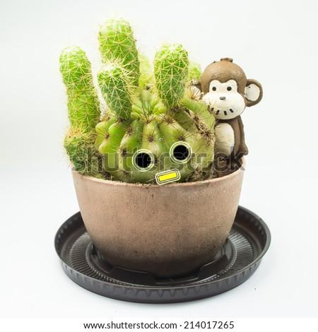 Cactus and Monkey doll on white background - stock photo