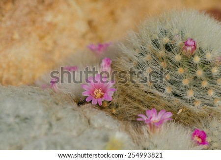 Cactus and pink flowers in garden, close up. - stock photo