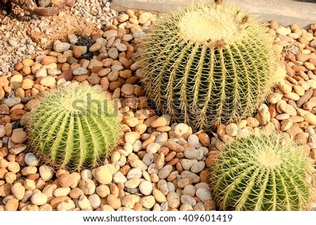 cactus and succulent in plot,nursery plant. - stock photo