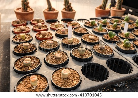cactus and succulent plot, in the nursery plant. - stock photo