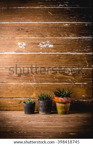 Cactus and succulents collection,cactus on wood background cactus hipster.View from above with copy space - stock photo