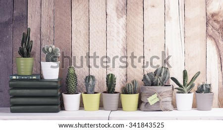 Cactus and succulents collection in small flowerpots. The rustic interior. Retro filter effect - stock photo