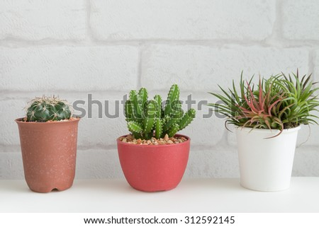 Cactus and tillandsia on white table and white brick wallpaper background