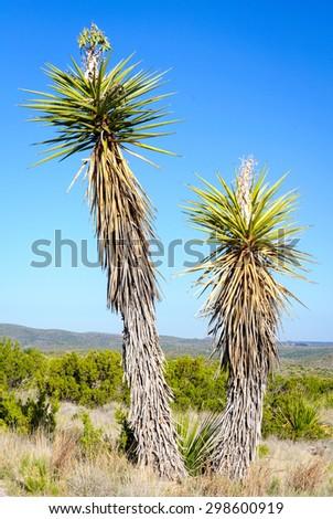 Cactus at Carlsbad Caverns National Park - stock photo