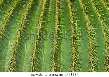 cactus background - stock photo