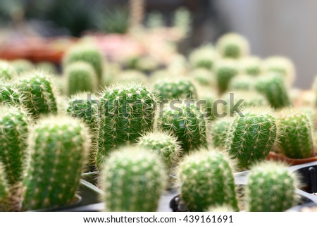 Cactus botanical nursery. Green background cactus close up - stock photo