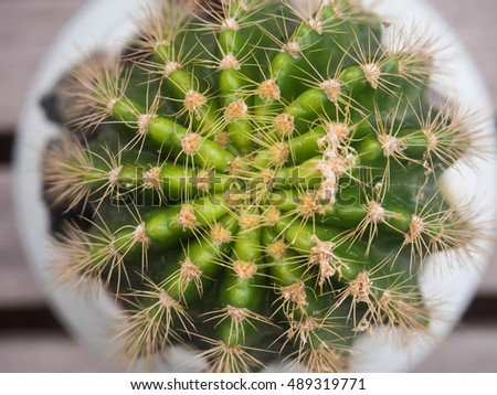 Cactus,Cactus thorn,Close up of globe shaped cactus with long thorns-Focus thorns