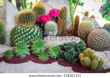 Cactus desert plant. - stock photo