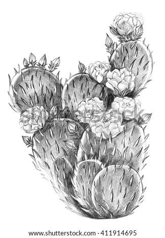 Cactus flower, isolated.  Dessert flora.  - stock photo