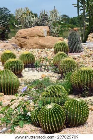 Cactus garden - stock photo